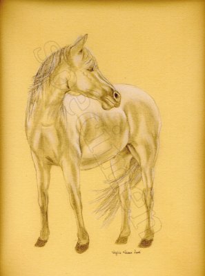 Cheval; taille 24x30 cm - Animaux -